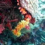 Koralle_Tauchen3