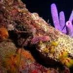 Nightdives_Curacao10