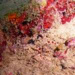 Nightdives_Curacao8