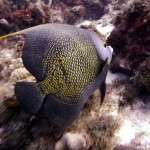 fish_diving_curacao1