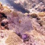 fish_diving_curacao11