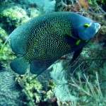 fish_diving_curacao12