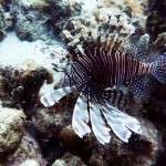 fish_diving_curacao20