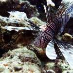 fish_diving_curacao21