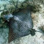 fish_diving_curacao35