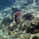 fish_diving_curacao38