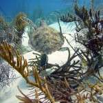 fish_diving_curacao46