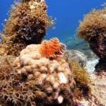 fish_diving_curacao6