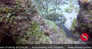 Heiko and Claudia diving