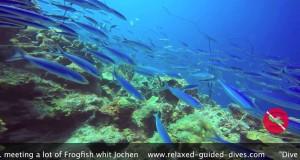 Jochen Diving