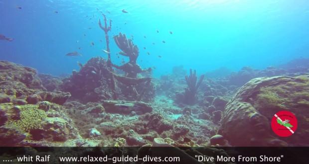 Ralf Diving