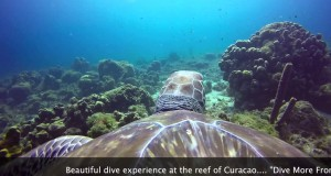 Referral dives on Curaçao